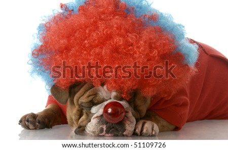 english bulldog wearing clown wig and nose laying down with reflection on white background - stock photo