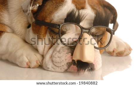 english bulldog wearing funny groucho marx glasses - stock photo