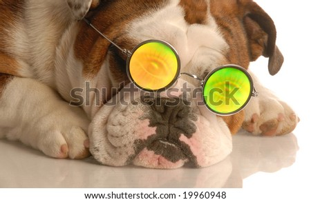 english bulldog wearing glasses with funny people eye glasses - stock photo
