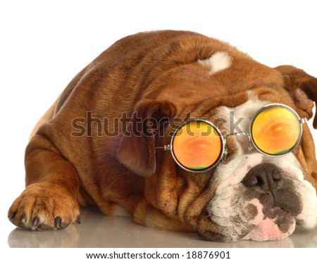 english bulldog wearing glasses with funny people eyes - stock photo
