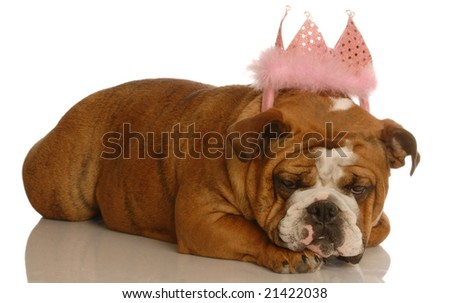 english bulldog wearing pink tiara - spoiled dog - stock photo