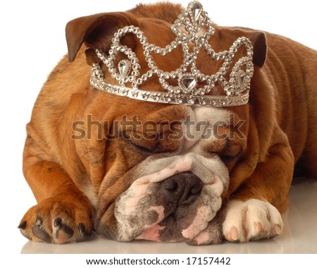 english bulldog wearing princess crown and silly expression - stock photo