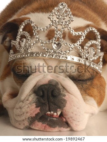 english bulldog wearing princess crown or tiara - stock photo