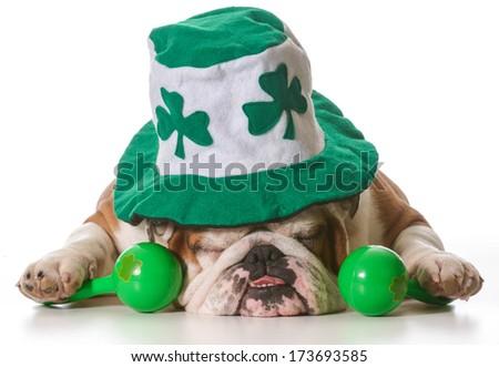 English bulldog wearing St Patrick's Day hat isolated on white background - stock photo