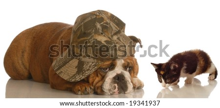 english bulldog with funny expression and sweet kitten approaching - stock photo