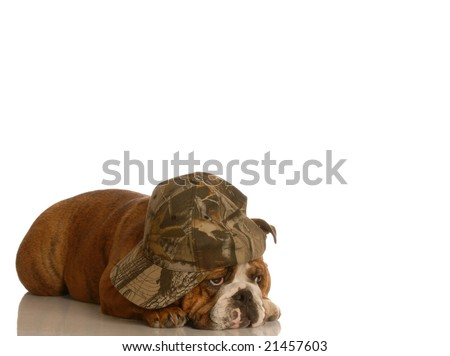 english bulldog with sad bored expression wearing cute hat - stock photo
