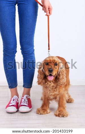 English cocker spaniel and owner in room - stock photo