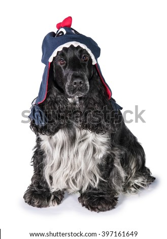 English cocker spaniel dog wearing funny hat - stock photo