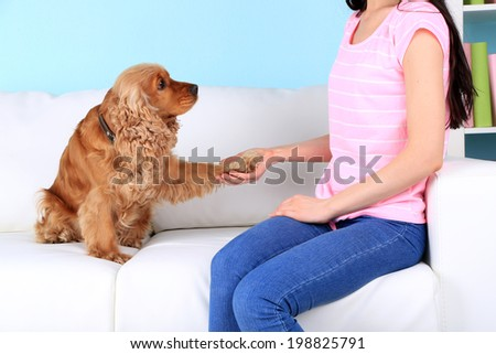 English cocker spaniel gives paw for owner