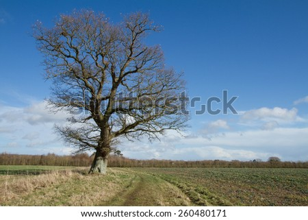English countryside  - stock photo