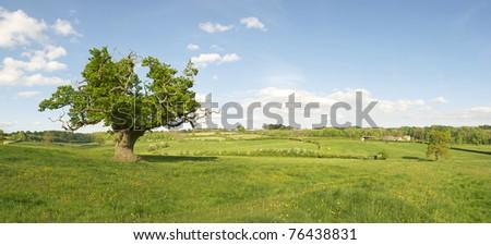 English Oak Panorama - stock photo