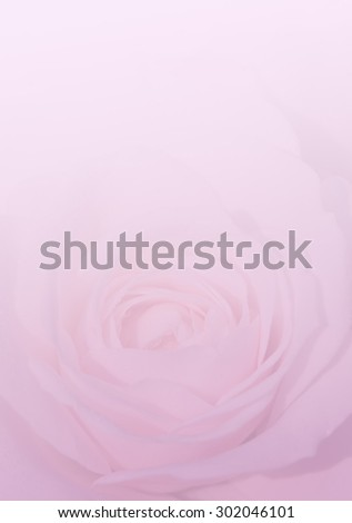 English rose in soft style for the background.