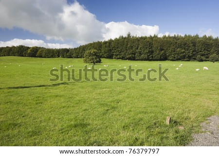 English sheep farm in Lake District, Cumbria. - stock photo