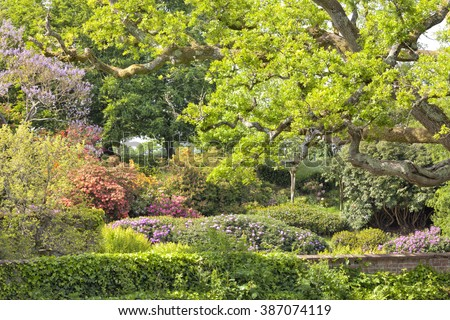 English spring garden with colourful flowering rhododendrons and azaleas, green shrubs, oak trees. - stock photo