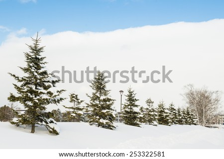 ENIWA, JAPAN - JANUARY 13, 2015: Fir trees covered by snow.