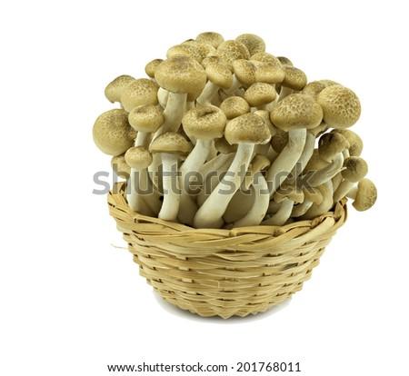 Enokitake mushrooms on white background - stock photo