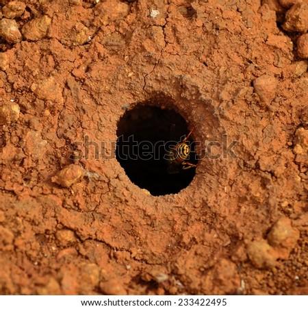Entrance hole to underground wasp nest - stock photo