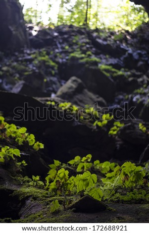 Entrance to a cave in the Gunung Mulu National Park, Borneo, Malaysia - stock photo