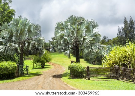 Entrance to a ranch in the highlands of Hawaii lined with trees and vibrant foliage. - stock photo