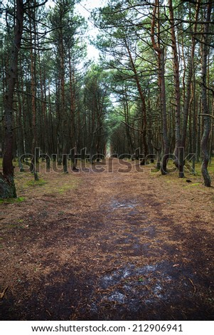 Entrance to the Dancing forest. - stock photo