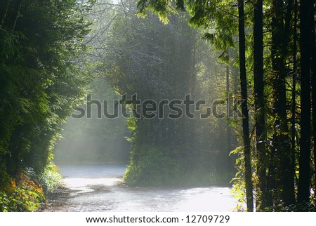 Entrance to the Pacific Rim rainforest with dispersed sunshine - stock photo