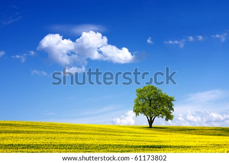 Environment - stock photo