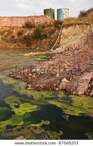Environment -algae background - stock photo