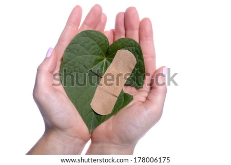 Environment concept with a girls hands holding a broken heart shaped leaf with a bandaid. - stock photo