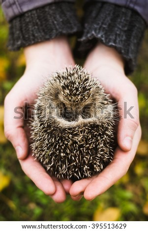 Environment protection: hedgehog in human hand  - stock photo