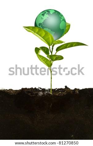 Environmental concept. Small earth plant - stock photo
