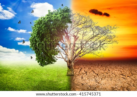 Environmental concepts, Live and dead big tree. - stock photo