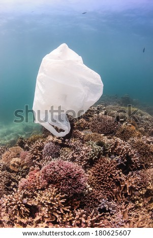 Environmental Damage - a discarded plastic bag floats past tropical corals.  Discarded plastic is a lethal hazard to marine turtles