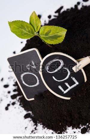 environmental friendly plant growing - stock photo