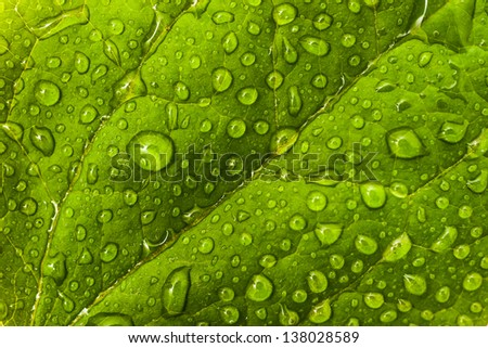 Environmental or floral pattern: green leaf with dew droplets. Extreme macro (artistic shallow DOF) - stock photo