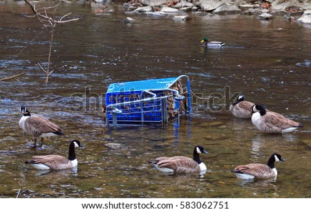 environmental pollution duck grocery cart