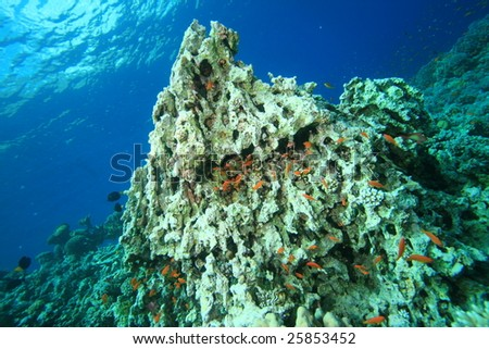 Environmental problem: coral killed by Global Warming - stock photo