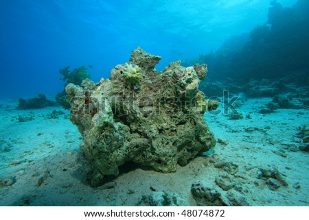 Environmental problem - Dead coral on a reef destroyed by global warming and pollution - stock photo