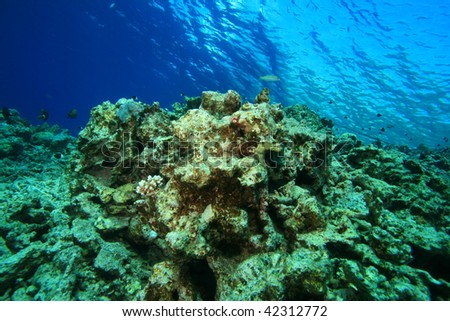 Environmental Problem - dead coral reef killed by pollution and global warming - stock photo