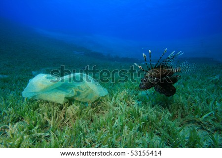Environmental problem - plastic bag in the ocean with Lionfish
