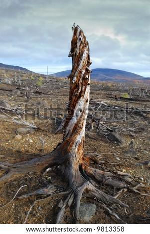Environmental problems. A soil erosion - stock photo