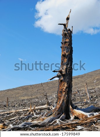 Environmental problems. Consequences of an acid rain - stock photo