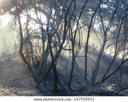 Epping Forest after a major fire. - stock photo