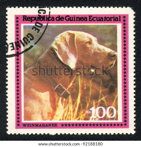 EQUATORIAL GUINEA - CIRCA 1978: A stamp printed in EQUATORIAL GUINEA shows  a Weimaraner,  from series Breeds of dogs, circa 1978 - stock photo
