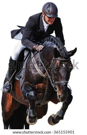 Equestrian: rider with bay horse in jumping show, isolated on white background - stock photo