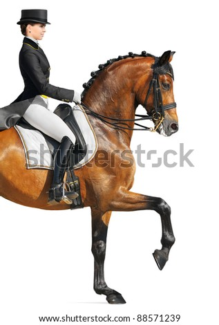 Equestrian sport - dressage (closeup, isolated on white) - stock photo