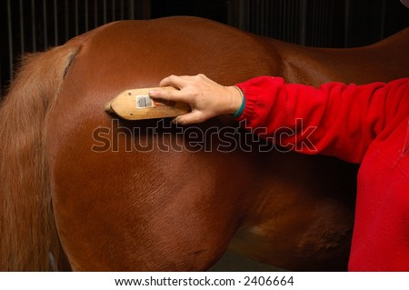 Equine health-care, Horse grooming, brushing the horse down after a ride - stock photo