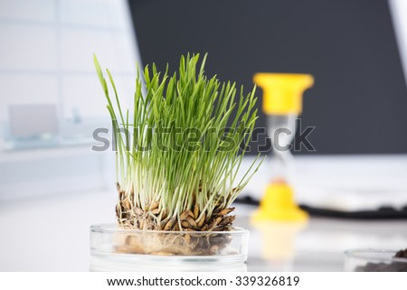 Equipment and the sample in laboratory - stock photo