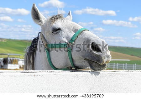 Equus ferus caballus. Beautiful white horse, at the moment with his eye is closed, from behind of the fence. Rural scene. Green meadows. Sky with clouds. - stock photo
