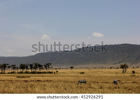 Equus quagga - Two zebras standing in the savannah in Masai Mara National Park, Kenya. On the backgroud there are trees, mountains and a blue sky. - stock photo