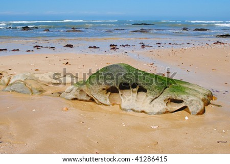 Eroded rock on beach with Algae, Port Alfred, Eastern Cape, South Africa